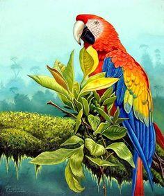 Araras Art scarlet macaw