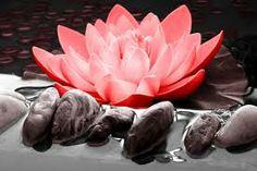 Kwaliteitscontrast -- Een contrastvorm, waarbij van een kleurtoon verschillende helderheden (licht en donker) en verzadigingen (fel en vergrijsd) worden gecombineerd. De rood/roze bloem is hierbij hoog verzadigd, de stenen en het water eromheen laag verzadigd.