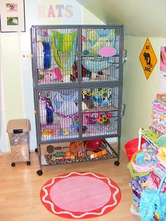 Beautiful and colorful pet room setup. I love the yellow sign and letters above the cage. I'll have to do something similar for my chinchillas one day. Cage Rat, Pet Rat Cages, Chinchilla Cage, Ferret Cage, Animal Room, Hamsters, Chinchillas, Critter Nation Cage, Sugar Glider Cage