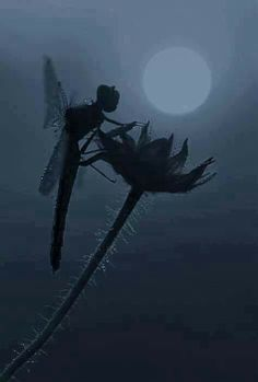 Wow, dragonfly looks like fairy