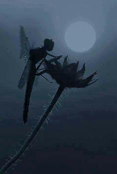 Wow, dragonfly looks like fairy