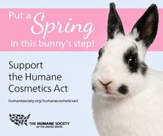Take Action! #BeCrueltyFree