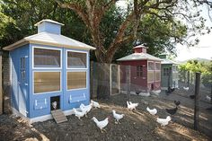 "The ""5 star"" chicken coops"