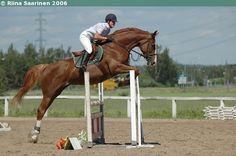 Finnish Warmblood mare Adira