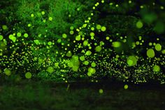 These Magical Photos Of Fireflies Dancing In The Forest Will Take Your Breath Away