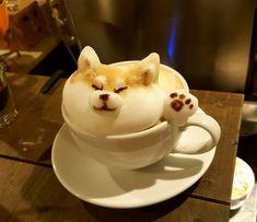 Such latte