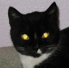 Cat Eye Light Reflection