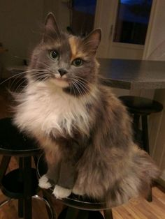 She thinks she's a model! http://ift.tt/2lVRUb8
