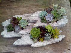Good Succulents / Malones Nursery Charlotte NC