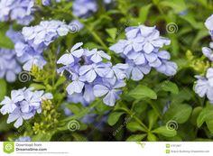 Resultado de imagen para IMAGEN DE PLANTAS CON FLORES AZULES