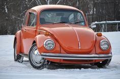 Cool 1302 beetle