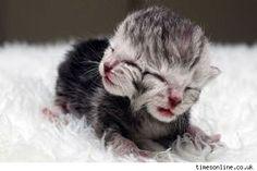 Kitten squared.