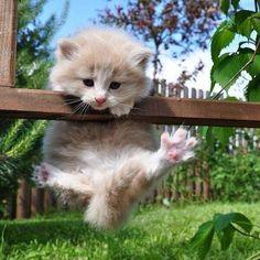 'Help me, I don't know how to get down now I've got up!' - Funny Kitten exploring