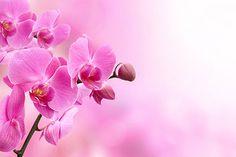 Closeup Pink Flowers