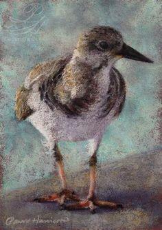 "Daily Paintworks - ""Shore Bird 1"" by Pamela Hamilton"