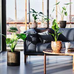 Op zoek naar de mooiste planten voor in je woonkamer, slaapkamer of zelfs badkamer? Wij helpen je met de nieuwe vtwonen pot&plant collectie. Helemaal leuk: de planten zijn allemaal met elkaar te combineren én bij elke plant zit een unieke vtwonen pot. Alocasia Stingray in Faded Rust pot, 21x75 cm (Øxh) € 39,95 Planten met… Affordable Home Decor, Affordable Furniture, Traditional Kitchen Faucets, Best Faucet, Modern Rustic Homes, Lifestyle Store, Home Upgrades, Plant Decor, Home Decor Inspiration