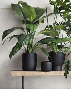 Plantas e vasos pretos . via #pinterest . . . . #saladejantar #decor #decoração #diningroom #clean #cleandecor #scandinavianstyle…