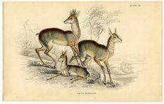 Instant Art Printable Download – Sweet Antelope – Christmas