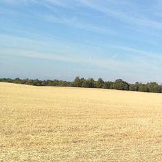 #InstagramELE #contento  Estoy contenta porque pronto voy a ver este paisaje. Los campos de Castilla tienen algo especial  #ceajuly101 #soria