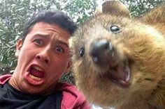 Quokka Selfies: What's the Deal With That Cute Australian Critter?