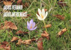 Es Madrid no Madriz Magazine Madrid, Natural, Plants, Afternoon Snacks, Summer, Plant, Planting, Planets, Au Natural