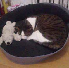 Kundenfeedback: So sieht das perfekte Katzenkörbchen aus! This is the perfect cat basket. Questo è il cesto gatto perfetta.