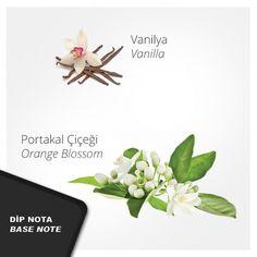 Nº 65 Kadın Parfümü #usocosmetics, #kadınparfümü, #perfume, #parfüm, #parfum
