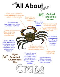 """My All About Crabs Book - Ocean Animal Unit Study from Courtney McKerley on TeachersNotebook.com - (9 pages) - This """"All About Book"""" will be a fun addition to your classroom and lesson on crabs. This packet can be used along with books specific to the animal or it can be used on its own. Other animals you will see in the ocean animal series include the sea horse,"""