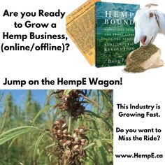 Are you ready to grow a hemp business? Share your affiliate link to build your business online. Get a strong start and grow your business offline as well! The Industrial Hemp industry is growing really fast, so jump on the HempE wagon today! Online Business Opportunities, Do You Believe, Natural Solutions, Growing Your Business, Hemp, Opportunity, Things To Sell, Industrial, Strong