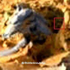 MARTE - Foto divulgada pela NASA de uma Criatura, Seria um ...