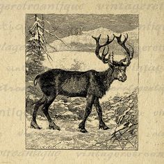 Reindeer Digital Image Download Deer Graphic Christmas Printable Antique Clip Art Jpg Png Eps 18x18 HQ 300dpi No.784 @ vintageretroantique.etsy.com #DigitalArt #Printable #Art #VintageRetroAntique #Digital #Clipart #Download