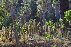 Entre cactus