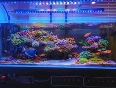 Reef Aquarium, Saltwater Aquarium, Nice And Slow, Light Cycle, Photo Gold, Question Of The Day, Getting Up Early, Building A New Home, Corals