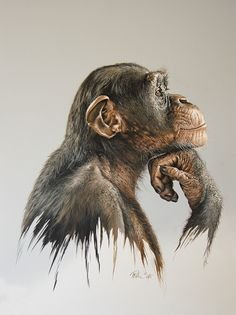 Pencil Drawing Tutorials stunning pencil drawings and acrylic paintings by austrian artist mario pichler Wildlife Paintings, Wildlife Art, Animal Paintings, Acrylic Paintings, Monkey Drawing, Monkey Art, Realistic Animal Drawings, Art Drawings, Pencil Drawing Tutorials