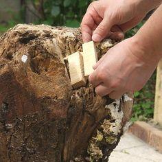 Etape 6 : Placer les morceaux de bois découpés dans les parties creuses et endommagées de la souche du tronc d'arbre, surtout sur le dessus de la partie devant recevoir le plateau.