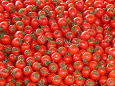 Did you know you can save tomato seeds and grow more tomatoes from them? Find out for yourself in this easy guide for saving tomato seeds! Queijo Cottage, Photos Free, Free Images, Goji, Tomato Chutney, Fiber Rich Foods, Agriculture, Red Tomato, Tomato Vegetable