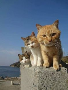 my hometown kitties
