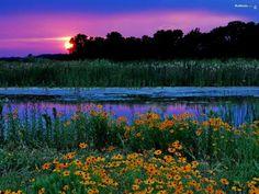 Blomst landskap - mobiltelefon bakgrunnsbilde, #10866