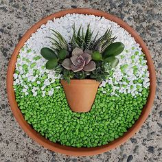 Succulent Arrangements Pots Dish Garden 35 Ideas For 2019 Succulents In Containers, Cacti And Succulents, Planting Succulents, Cactus Plants, Container Flowers, Container Plants, Air Plants, Potted Plants, Succulent Gardening