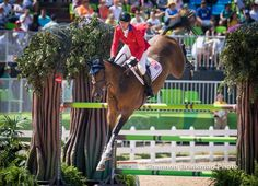 Bay Horse Show Jumping Jump Stallion Gelding Mare