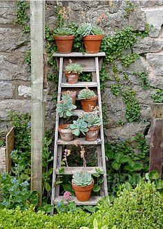 ABC das Suculentas: Escadas (plants in pots succulents) Jardin Vertical Diy, Vertical Garden Diy, Vertical Gardens, Vertical Planting, Vertical Bar, Small Gardens, Succulent Pots, Cacti And Succulents, Planting Succulents