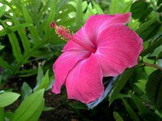 Tapeta Růžový květ 800x600