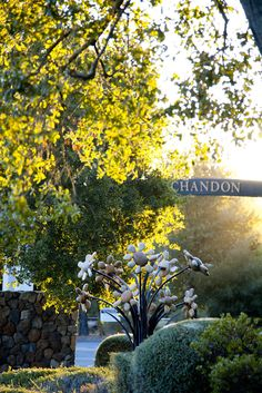 At Chandon, we make wine and live life with a genuine, energetic and creative outlook