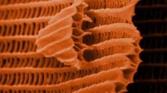 Butterfly Wings Look Completely Crazy Under an Electron Microscope