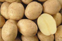 Αρχείο:Ποικιλία πατάτας Safari.jpeg