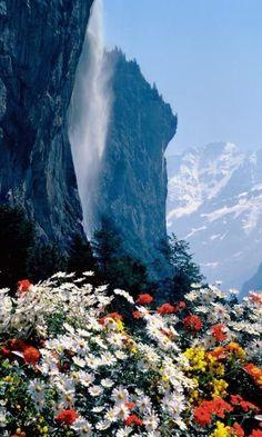 Wild flowers by Staubbach Falls in Lauterbrunnen, Bern (Switzerland)