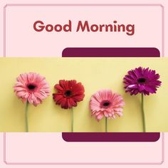 Good Morning Wishes, Good Morning Images, Laughing, Gud Morning Images, Good Morning Picture