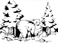 Coloring Page Airplane Outline : Grizzly bear coloring pages coloring page bears