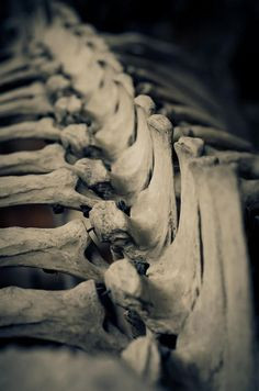 bones / Anatomical <3