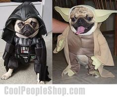 Star Wars Pugs Darth Vader and Yoda | Hilarious ...